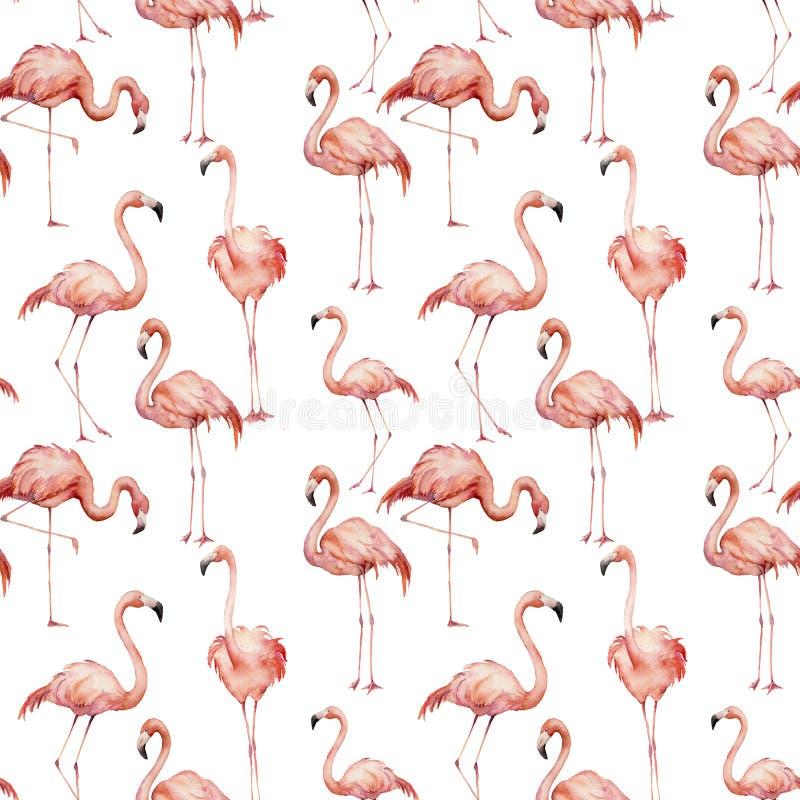Картина фламинго акварели розовая Рука покрасила ярких экзотических птиц изолированный на белой предпосылке Одичалая иллюстрация  иллюстрация вектора