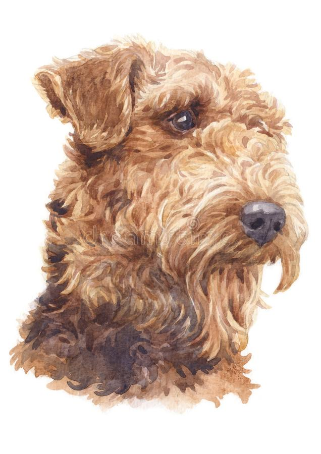 Картина цвета воды, вьющиеся волосы 053 собаки терьера Airedale иллюстрация вектора