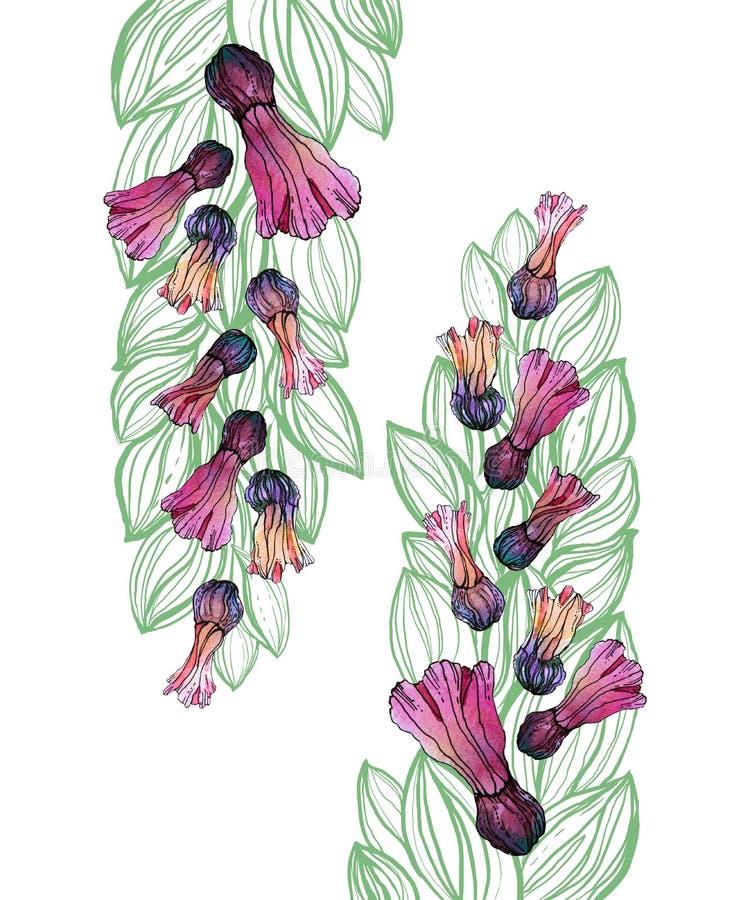 Картина цветка акварели безшовная, белая предпосылка стоковые изображения rf