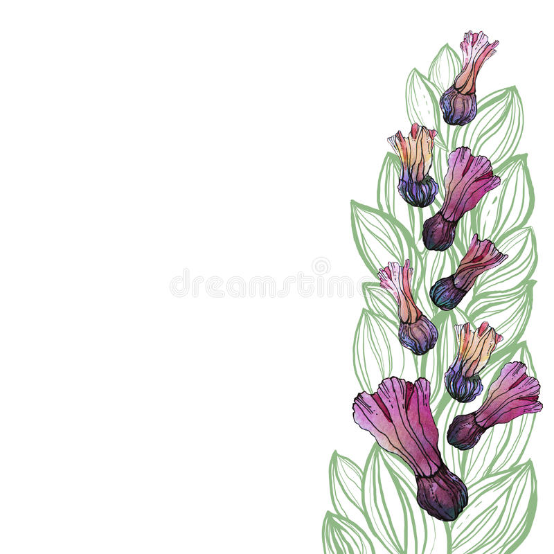 Картина цветка акварели, белая предпосылка стоковое фото