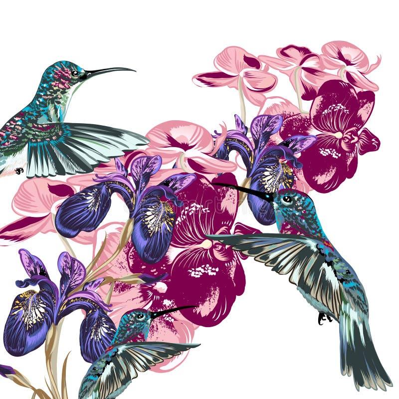 Download Картина цветка с колибри, орхидеями и радужками Иллюстрация вектора - иллюстрации насчитывающей бобра, карточка: 49634528