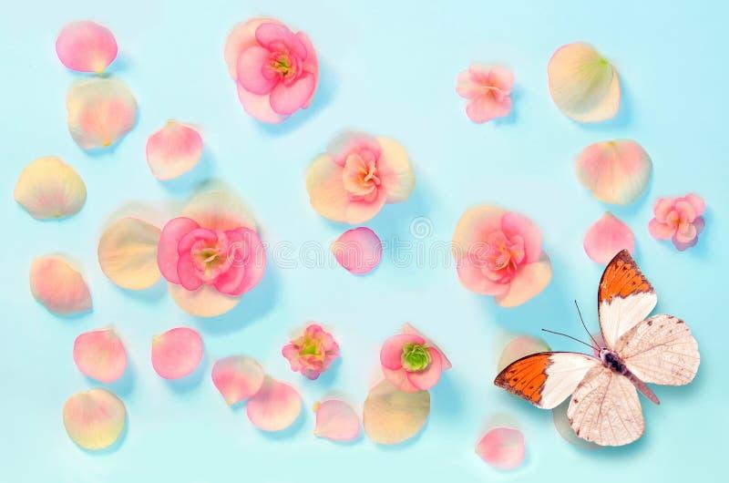 Картина цветков и бабочки на голубой предпосылке стоковая фотография rf