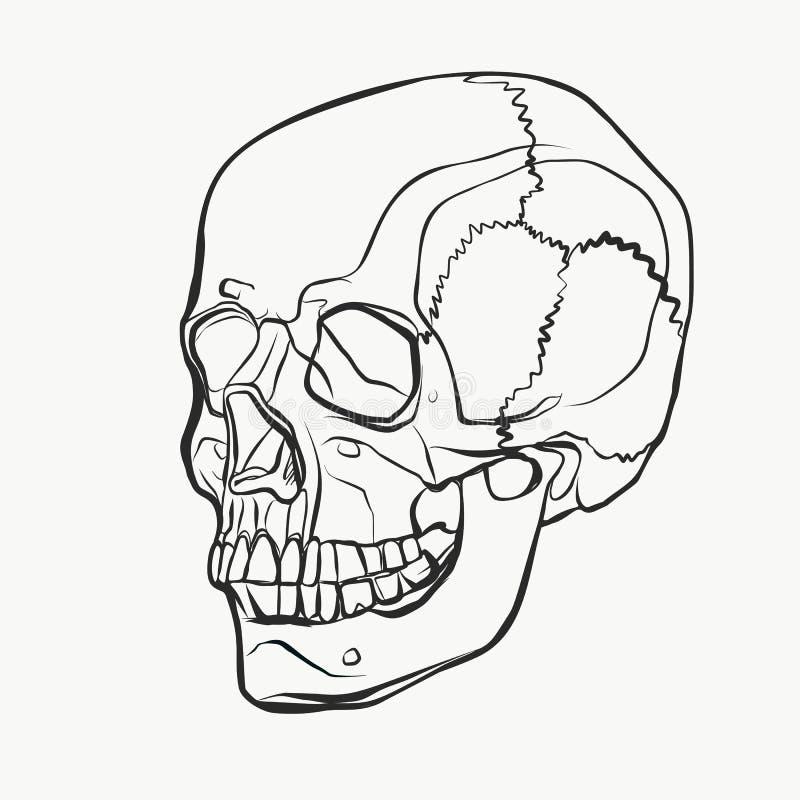 Картина черепа в стиле нарисованном рукой Иллюстрация вектора черно-белая иллюстрация вектора