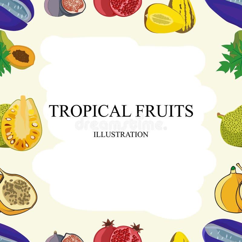 Картина экзотических плодоовощей безшовная тропических манго и грейпфрута или апельсина, карамбола и дракон приносить, guava и lo иллюстрация штока