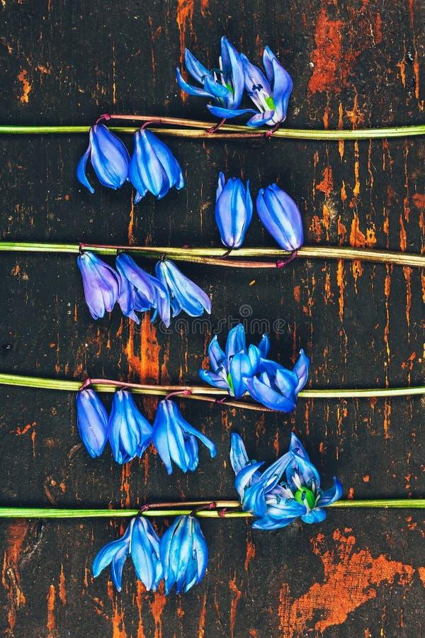 Картина Bluebell цветков на предпосылке ретро grunge деревянной, плоском положенном взгляде сверху стоковая фотография rf