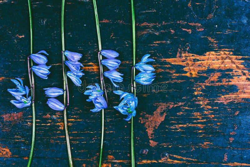 Картина Bluebell цветков на предпосылке ретро grunge деревянной с космосом экземпляра, плоским положением стоковая фотография