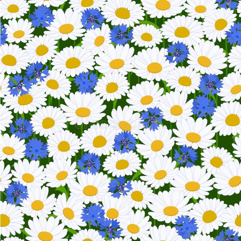 картина cornflower camomiles безшовная бесплатная иллюстрация