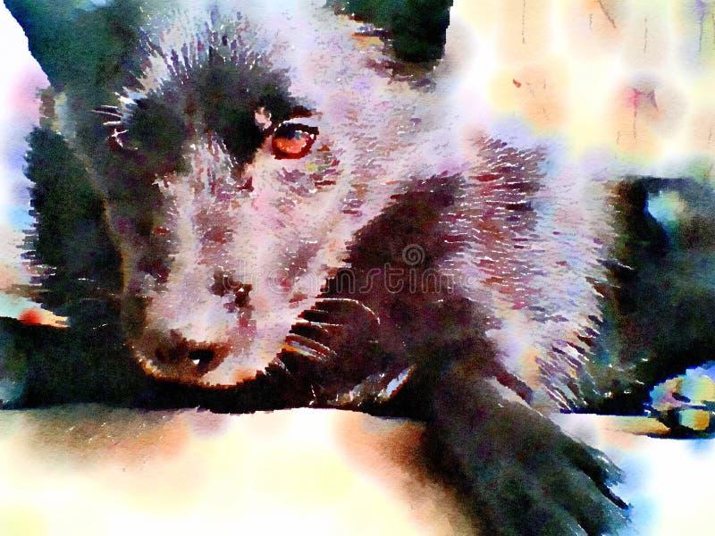 Картина Watercolour черной собаки Шипперке конец вверх бесплатная иллюстрация