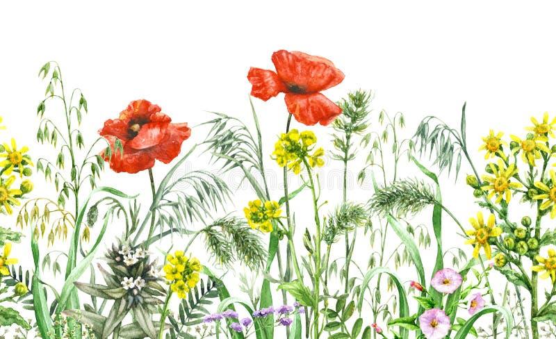 Картина Wildflowers безшовная горизонтальная иллюстрация штока