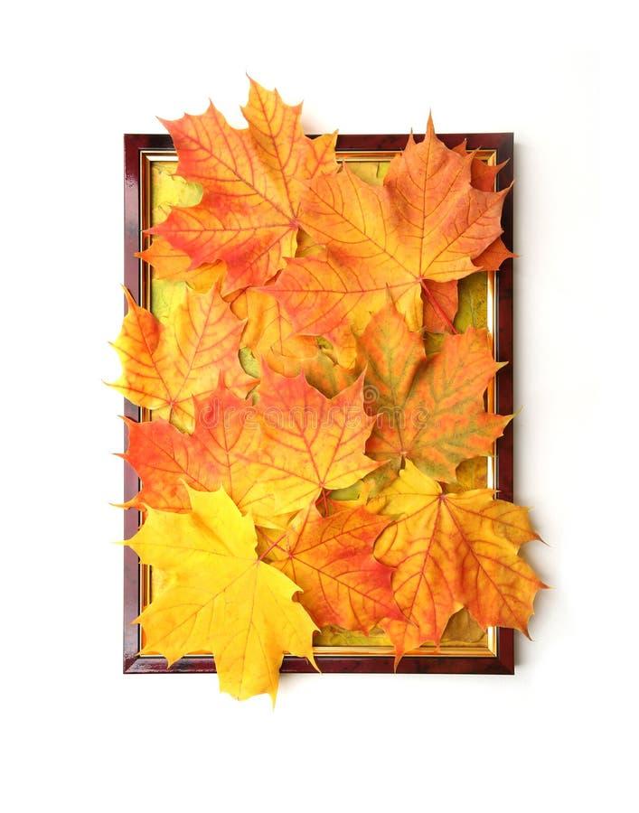 Картинная рамка с составом кленовых листов как украшение осени в интерьере стоковое изображение rf