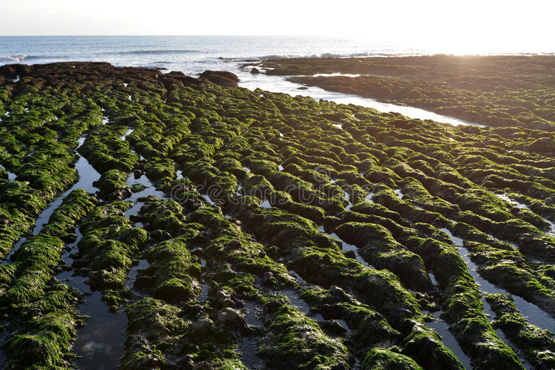 Картины берега стоковое изображение