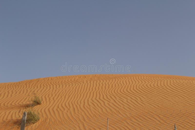 Картины в дюне песков Wahiba в Омане стоковая фотография rf