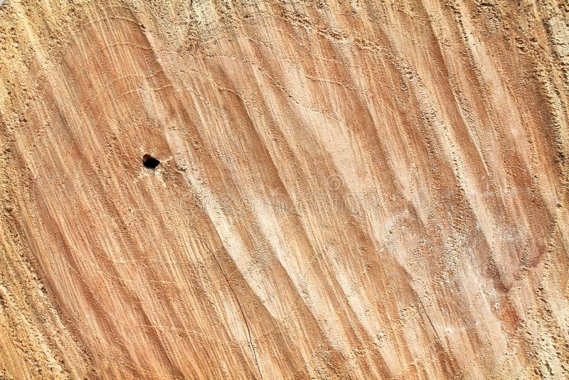 Картины древесины пня текстуры взгляда сверху естественные для предпосылки стоковые изображения