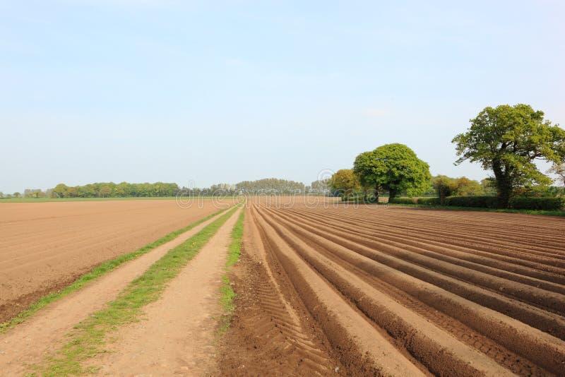 Картины и текстуры сельскохозяйственных угодиь в ландшафте весеннего времени аграрном стоковое изображение rf