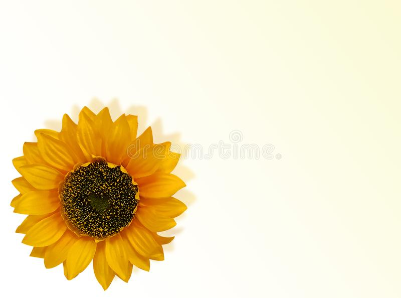 Карточка солнцецвета стоковая фотография