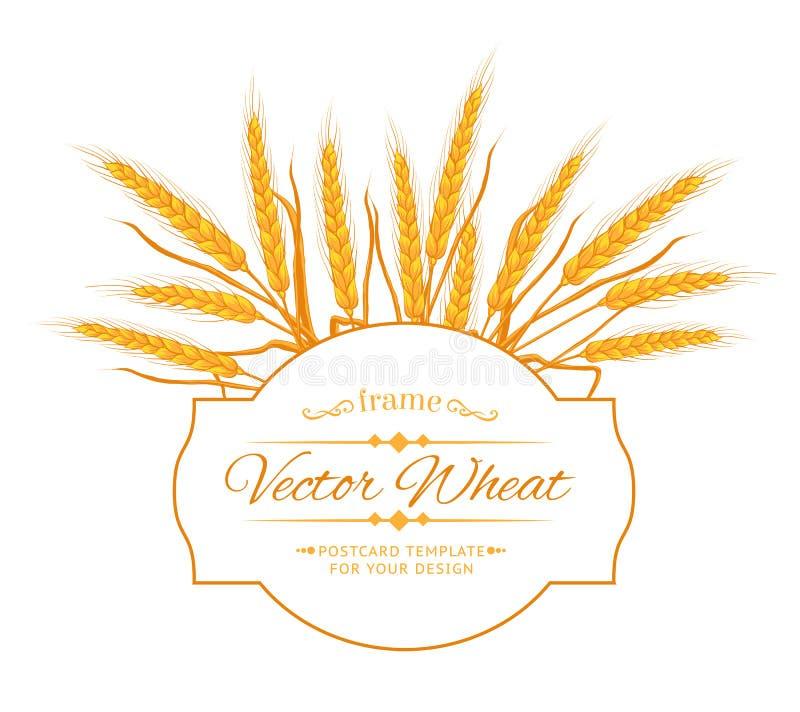 Download Карточка уха пшеницы иллюстрация вектора. иллюстрации насчитывающей индустрия - 41661343