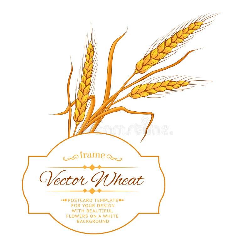 Download Карточка уха пшеницы иллюстрация вектора. иллюстрации насчитывающей пук - 41661373