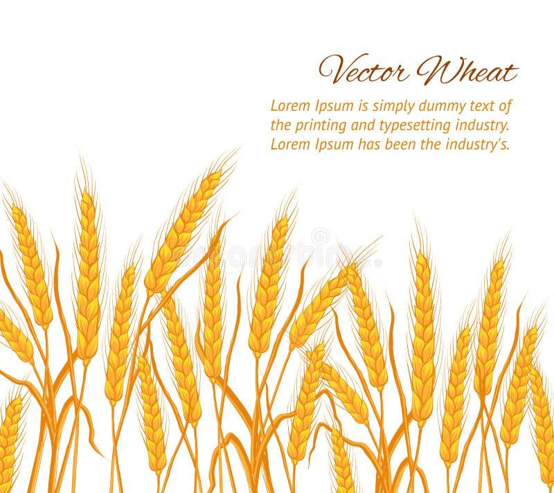 Download Карточка уха пшеницы иллюстрация вектора. иллюстрации насчитывающей automobiled - 41662167