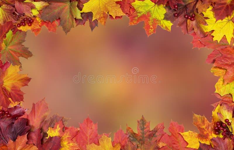 Карточка ярких кленовых листов осени стоковые изображения