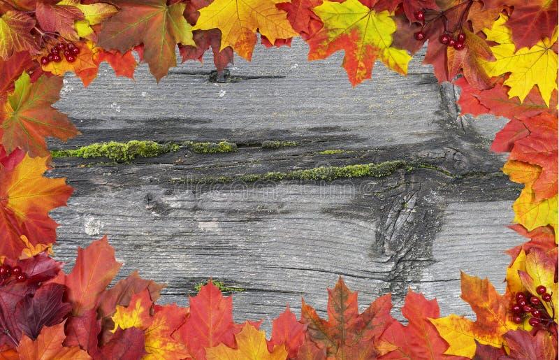 Карточка ярких кленовых листов осени стоковое фото rf
