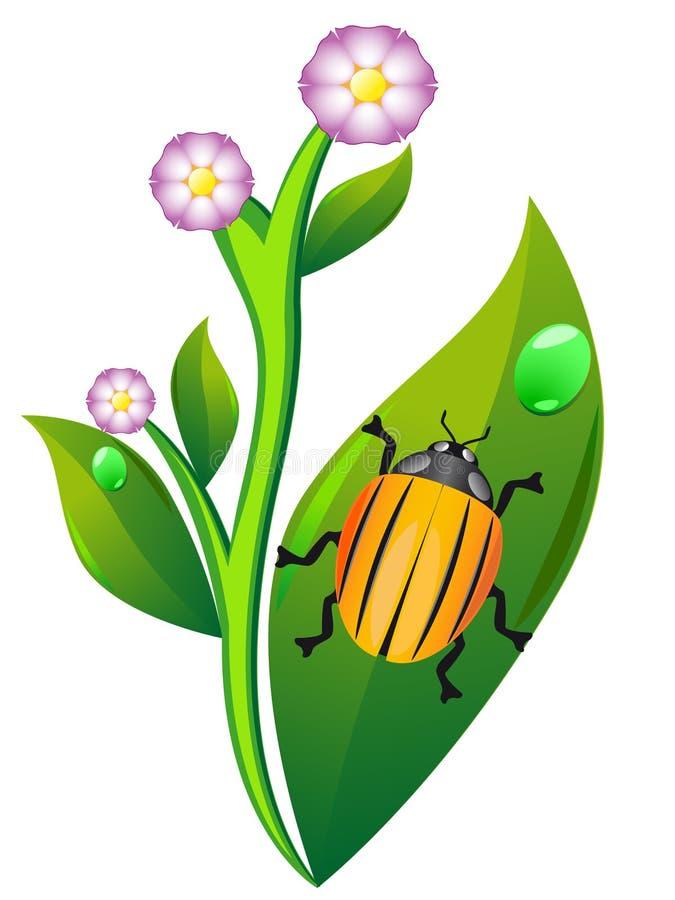 картошка листьев colorado жука иллюстрация штока