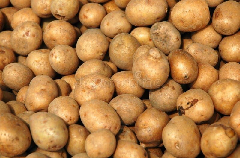 Download картошка стоковое фото. изображение насчитывающей еда, плодоовощ - 89170