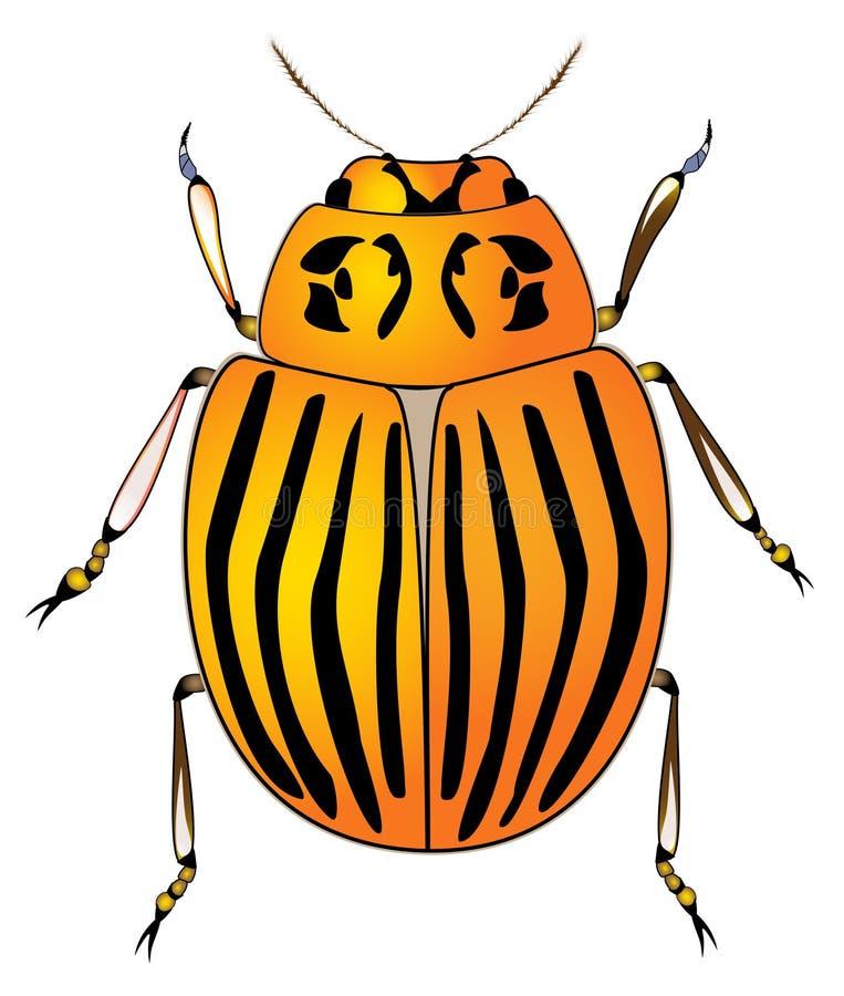 картошка colorado жука иллюстрация вектора