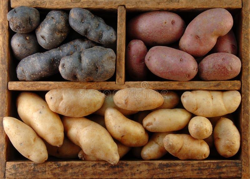 картошки коробки деревянные стоковое фото