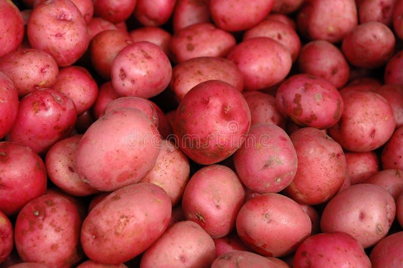 картошки красные стоковая фотография