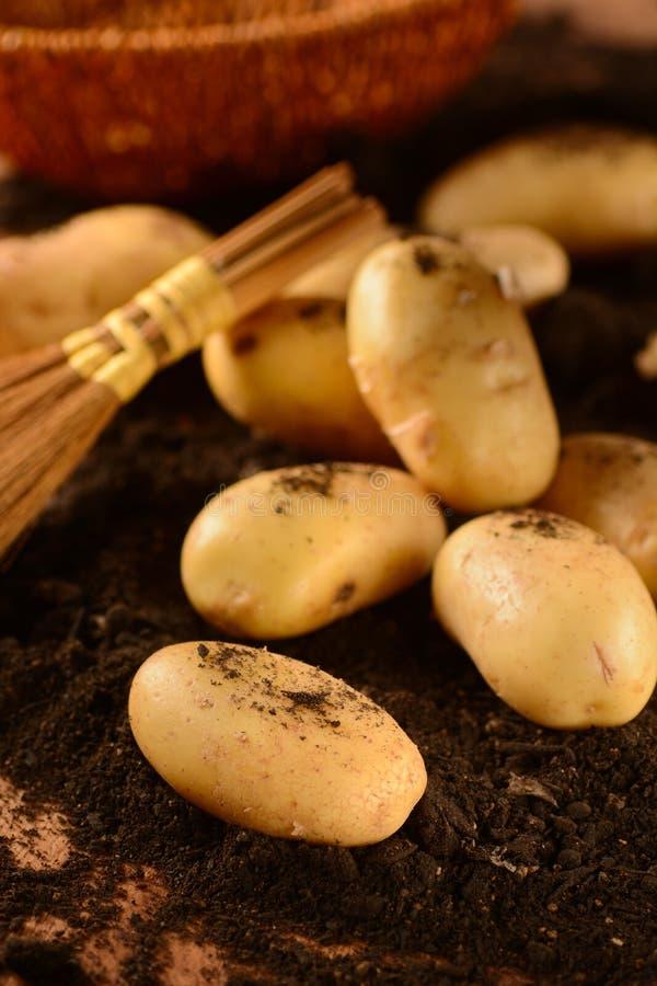 картошки кучи стоковое изображение rf