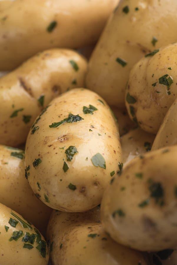 Картошки младенца с укропом и маслом стоковые фотографии rf