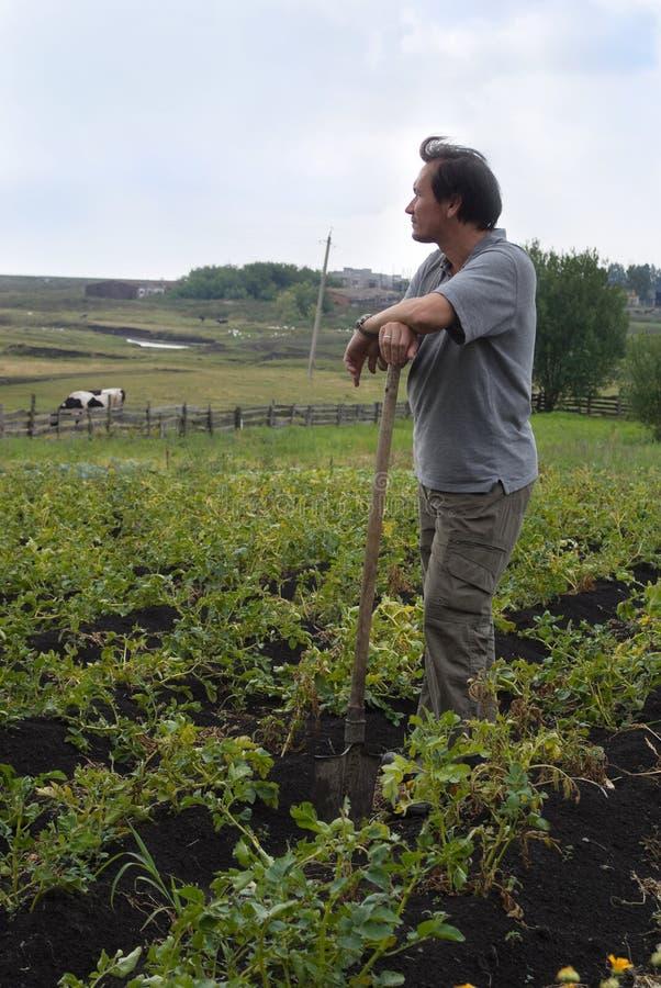 картошки человека поля стоковая фотография rf