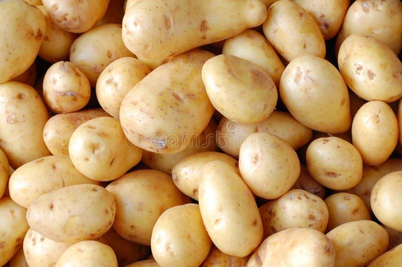 Download картошки стоковое изображение. изображение насчитывающей brougham - 18379081