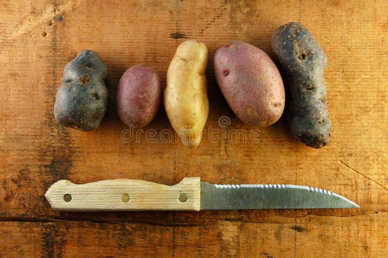 картошки fingerling ставят разнообразие на обсуждение деревянное стоковое фото