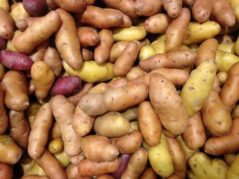 Картошки Fingerling для продажи стоковое фото