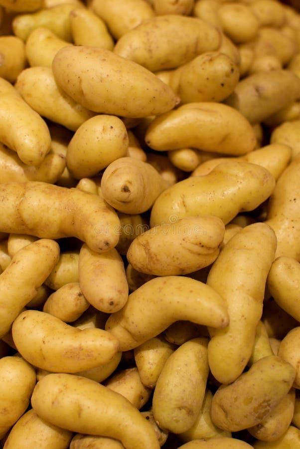 Картошки Fingerling стоковое изображение