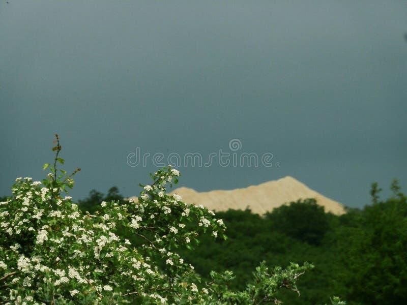 Карьер песка и зацветая дерево стоковое изображение