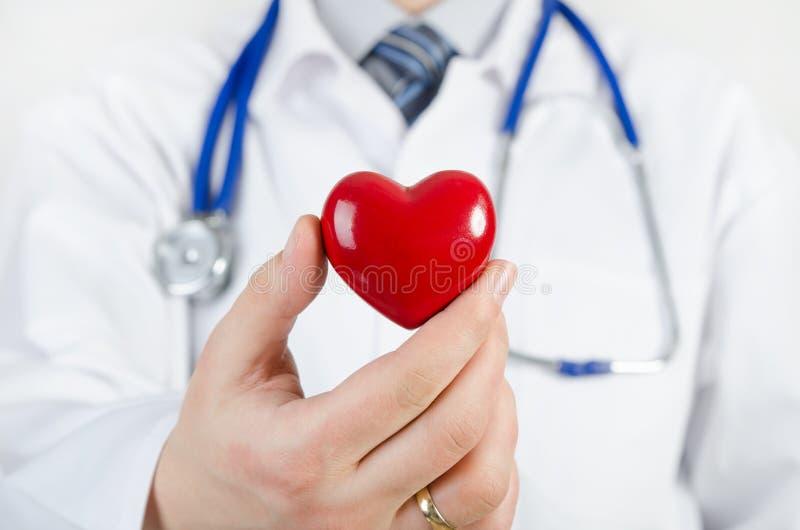 Кардиолог держа модель сердца 3D стоковое фото
