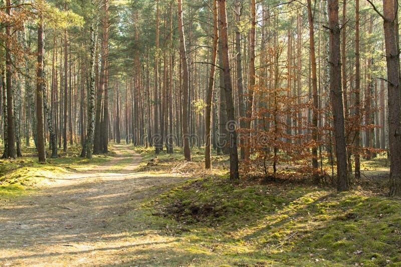Касание весны в лесе стоковая фотография rf