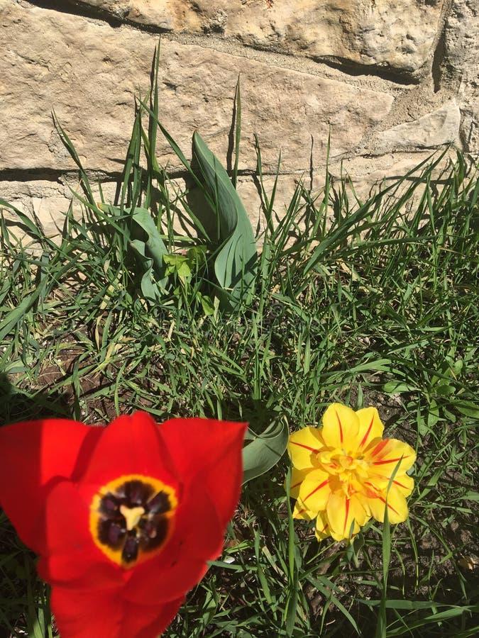 Касание сладостной весны стоковая фотография