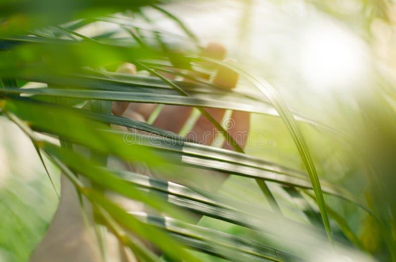 Касания руки женщины и наслаждаются зелеными листьями ладони освещенными по солнцу стоковое фото rf