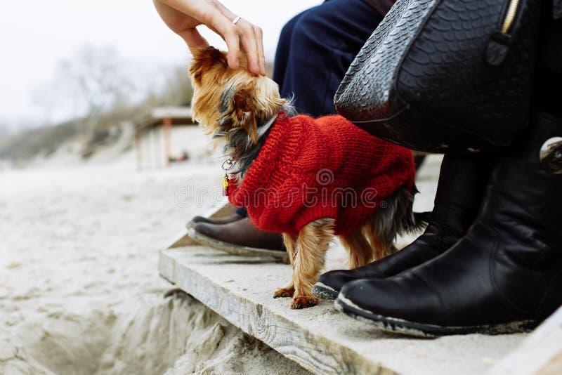 Касаться собаке на пляже стоковая фотография rf