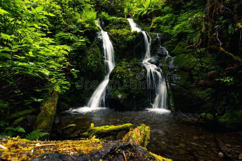 Каскадный водопад, Кино-Лоп-Трейл, озеро Куино и тропический лес, Олимпийский национальный парк, Вашингтон, Путешествие США, тури стоковое фото