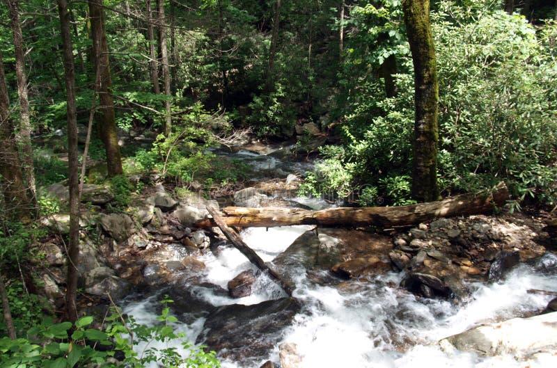 Каскады вдоль реки Catawba в национальном лесе Pisgah стоковое изображение