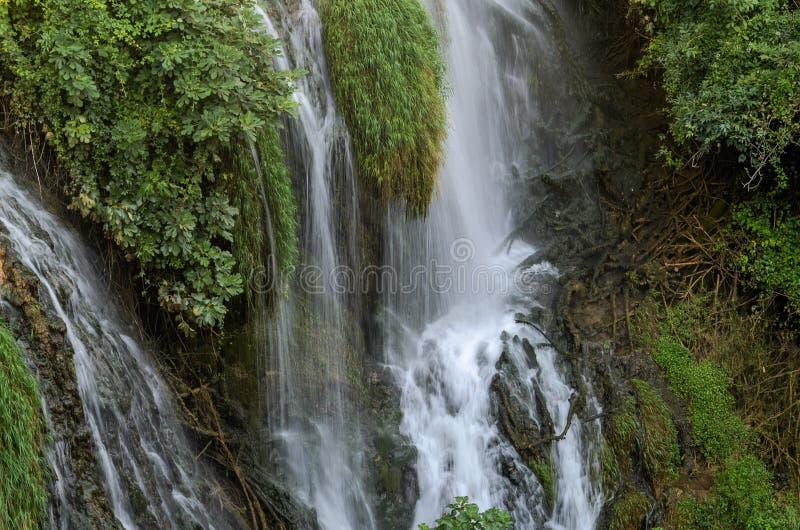 Каскады водопадов горы среди зеленых растений стоковая фотография