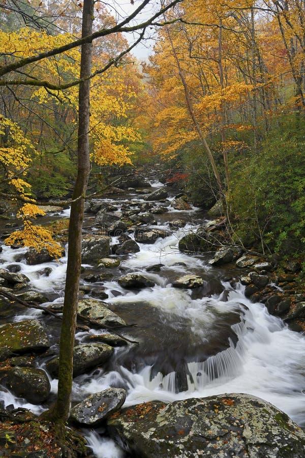 Каскады и небольшой водопад в больших закоптелых горах, Теннесси, США стоковые изображения rf