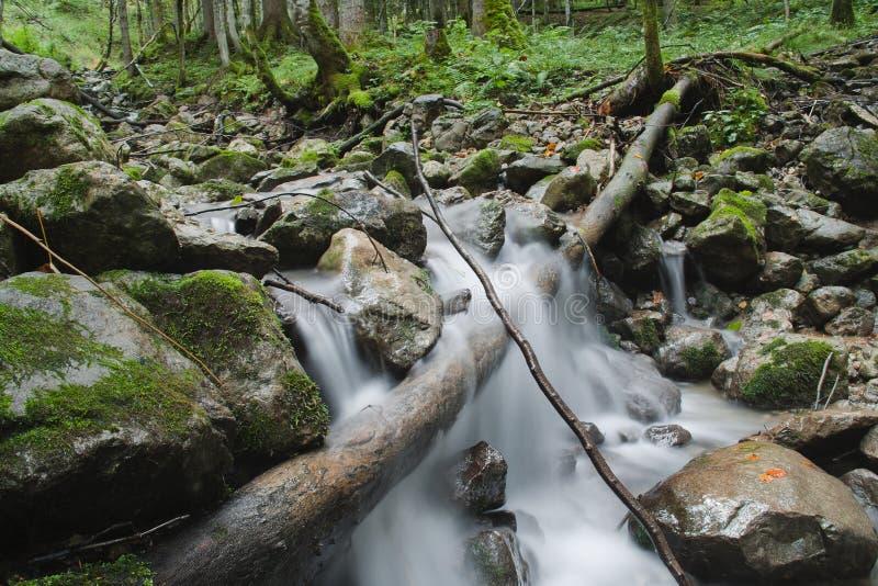 Каскады леса стоковые фото