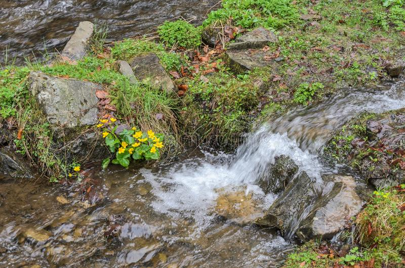 Каскады чистого реки горы среди камней стоковая фотография rf