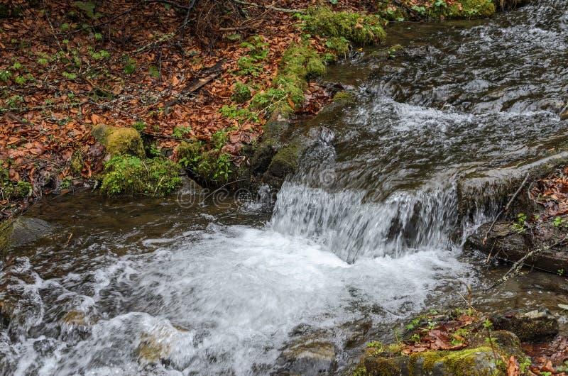 Каскады чистого реки горы среди камней стоковое изображение rf