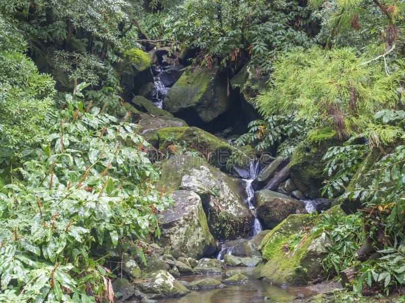 Каскад весны воды с мхом и камнями и сочная зеленая растительность в джунглях тропического леса в конце пешего туризма стоковая фотография rf